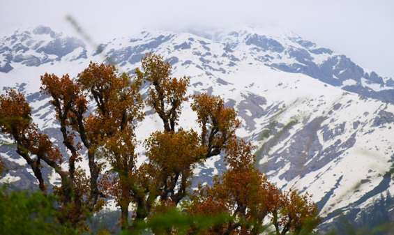 Trek to khirganga in just inr 9000/- per person