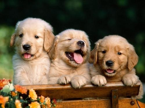 Pictures of Best quality pups at best prices--delhi 4