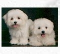 Cutecompanions kennels breeders & importer of pets