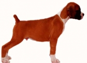 We breed and sale top quality dogs
