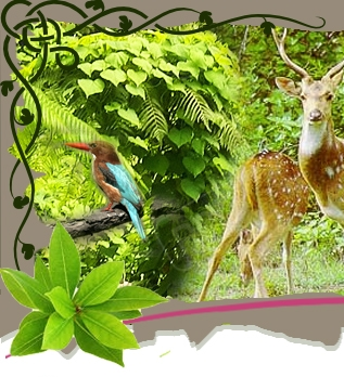 Jim corbett christmas & new year discounted tour package