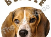 Beagle puppies for sale | the dog house | 9811976111