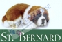 SAINT BERNARD PUPPIES FOR SALE | THE DOG HOUSE | 9811976111