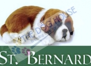 Saint bernard puppies for sale | the dog house | 9811976111