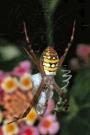 Termite Control | Termite Inspections | - Brisbane Termite Services