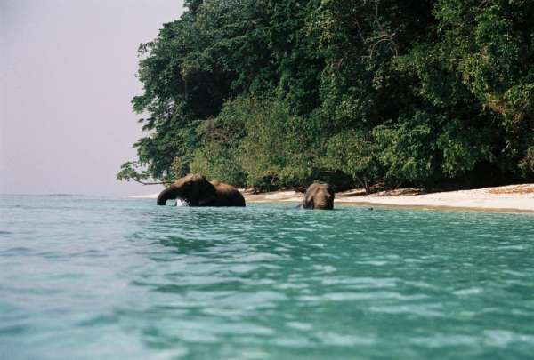 Exclusive trip to andaman with massive discount offer ? ashlar tours & travels