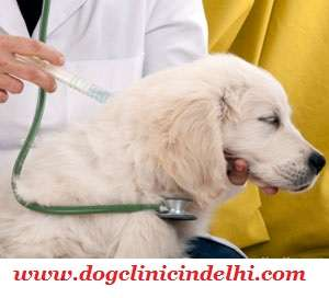 Best veterinary clinic in rohini, delhi