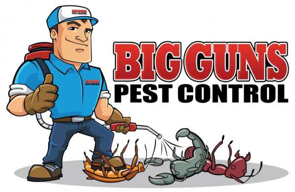 Eliminate spiders in your house ? pest control services in delhi | +91-9911918545