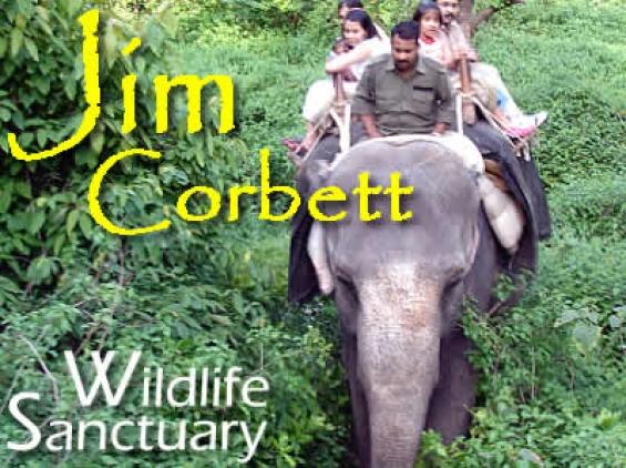 Jim corbett tour packages