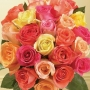 Mix color rose bouquet : winni