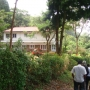 Tea estate with well maintained bungalow for sale at Nilgiris hill District