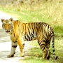 Village Machaan Pench,vvillage resorts ,hotels at pench,resorts at pench,hotels in pench,r