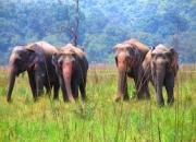 Wildlife resorts & hotels at best deals in corbett