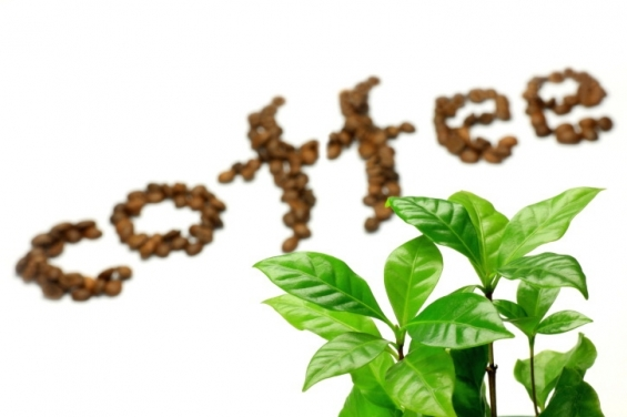 Green coffee bean health supplement melt away your current excess fat speedily and also ma