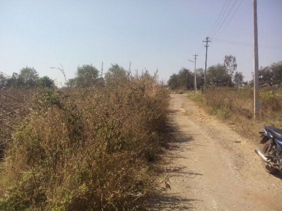 Wanted 40x60 site in dattagalli