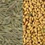 yellow maize manufacturer in Gujarat