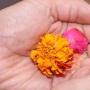 Join 200 Hours Hatha Yoga Teacher Training in Rishikesh, India