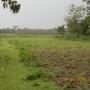 Very Useful Ideal Land (3+bigha) for Sale in Alipurduar