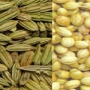 Groundnut In Shell in Gujarat