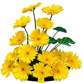 Send fresh flower from bangalore florists