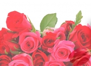 Send flowers and gifts online.