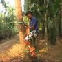 Coconut Tree Easy Climber