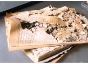 Termite treatment services in delhi- save 10%