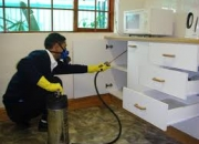 Pest control for cockroaches in noida- best services