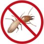 10 % Discount on termite treatment in Gurgaon