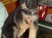 Friends kennel ~kolkata offers all types of pure …