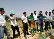 Medicinal Plant's Cultivation Training Program at Pink City Jaipur