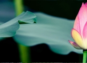 Posh Flats Lotus Greens Tulip Sports City @ +91- 9560090054