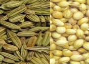 groundnut exporters in Surat