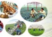 Supplying high-quality Agriculture workers to Middle East