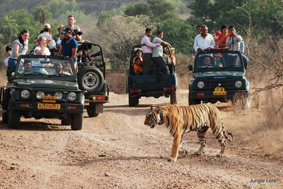 Booking with best summer seasons rates tour to ranthambore national park