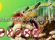 Pest control services in bangalore call 09740097555