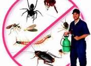 Pest control greater noida–best deals (9899176888)