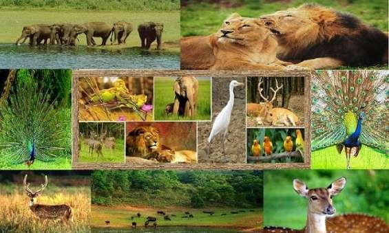 Gujarat national parks and wildlife sanctuaries tour packages