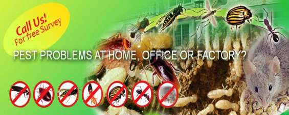 Cockroaches control services in bangalore call @ 09740097555