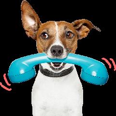 Online pet food supplies shop