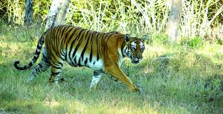Bandipur national park in india