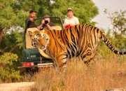 Wild life tours in india | alluring india destination