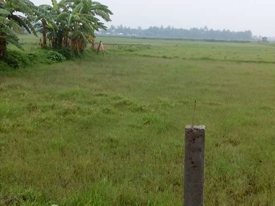 Just come an d buy directly land from company