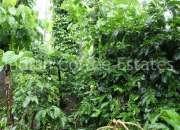 10 Acres  Maintained coffee estate for sale Distance Madikeri to 18Km Via Bagamandala