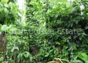 4 Acres  Maintained coffee estate for sale Distance Madikeri to 9 Km (Near Mahendra Res