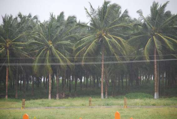 9.5 acres farm land for sale in pollachi