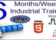 6 months industrial training
