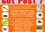 Pest control services | residential pest control services, chennai, india