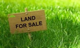 Urgent sale big industrial land