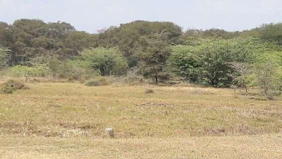 Sri bhuvaneshwari nagar patta land sriperumbudur near